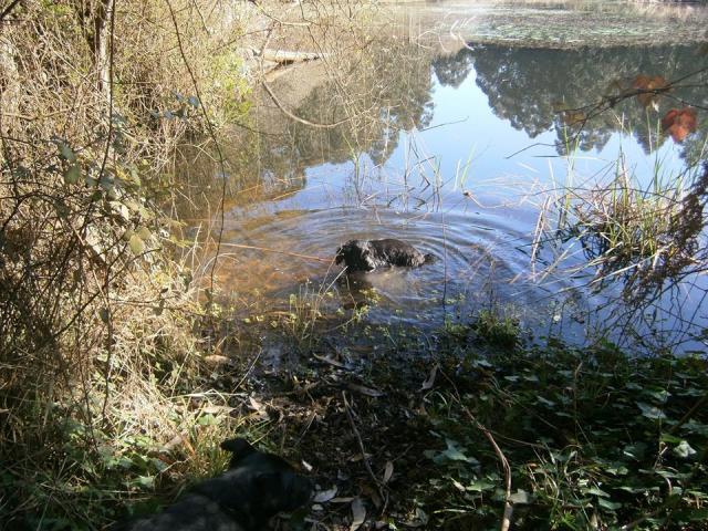 Lagoa dos Patos 03